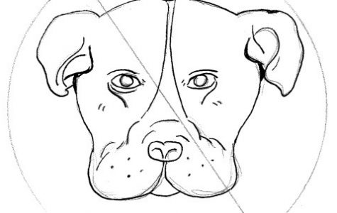 Potential Pit Bull Ban in Lowell Not a Long-Term Solution