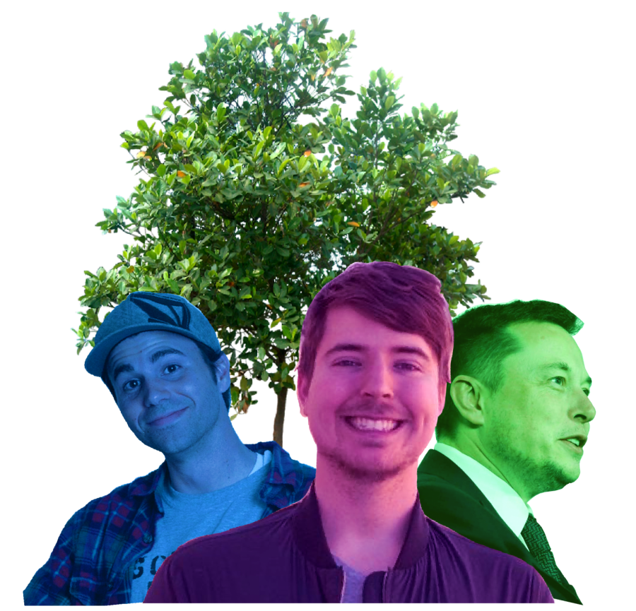 MrBeast%E2%80%99s+Tree+Planting+Campaign+Inspires+Fans